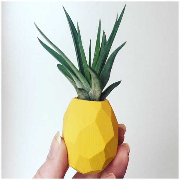 Air Plants with Pineapple Magnet Holder - Tropical Yellow