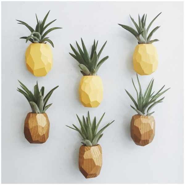 Air Plants with Pineapple Magnet Holder